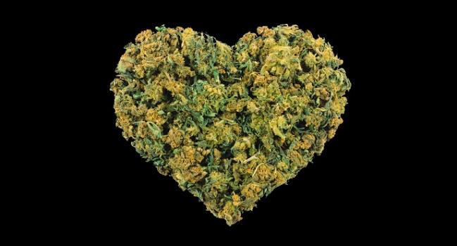 Marijuana May Muddle a Chest Pain Diagnosis, CTA Study Hints