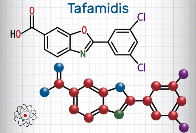 Tafamidis, a Transthyretin Stabilizer, Offers Hope for Rare Cardiomyopathy