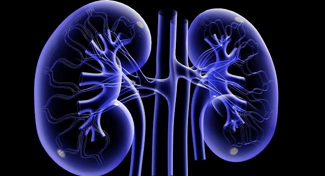 Small Study Lends Further Support to the Anti-arrhythmic Potential of Renal Denervation