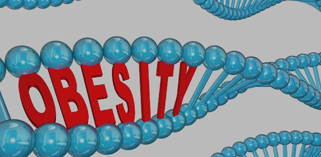 Genetics Only Weakly Predicts Midlife BMI for Young Adults
