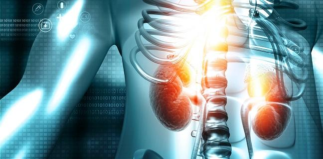 Renal Function Gains Seen in CKD Patients After TAVR