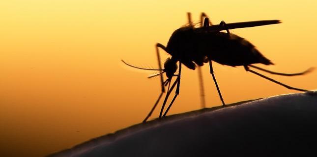 CV Complications of Malaria Rare but Portend Poor Prognosis