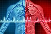 Ablation Cuts A-fib Recurrences, Burden Through 5 Years in CABANA
