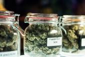 Cannabis Has No CV Benefits and Substantial Risks, Says AHA Statement