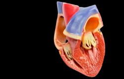 Reduced-Dose Rivaroxaban May Be an Option After LAA Occlusion, ADRIFT Hints
