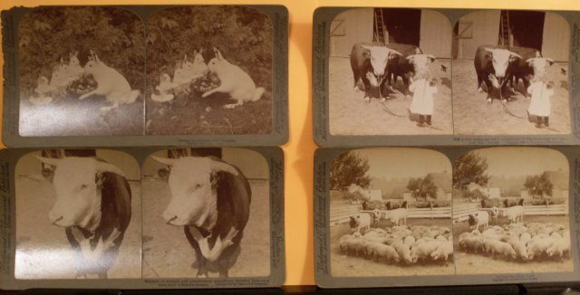 Circa 1894 , 1890 1903 1923 Antique Stereoview Cards._ FARM SCENES _Works and Studios_ Underwood & Underwood_ Titles: A Canadian Farm Yard , Girl + Bull, Rabbits Supper + Bull