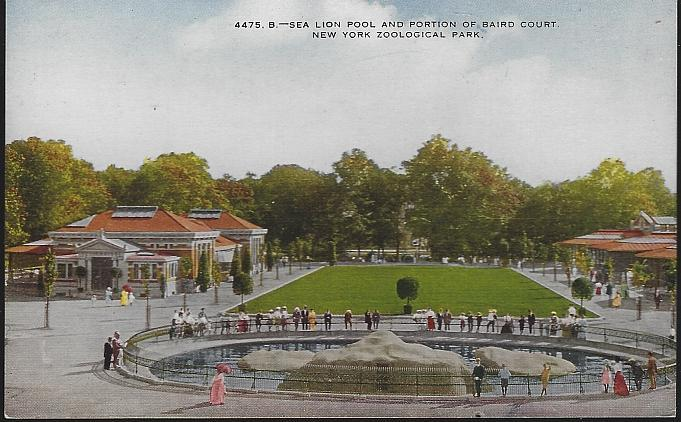 Unused Postcard Sea Lion Pool and Portion of Baird Court, New York Zoological