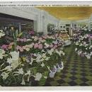 Vintage Postcard of The Flower Shop Edgewater Beach Hotel, Chicago, Illinois