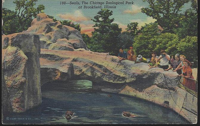 Vintage Unused Postcard of Seals Chicago Zoological Park at Brookfield Illinois