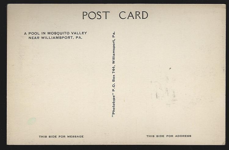 Vintage Unused Postcard Pool in Mosquito Valley Near Williamsport, Pennsylvania