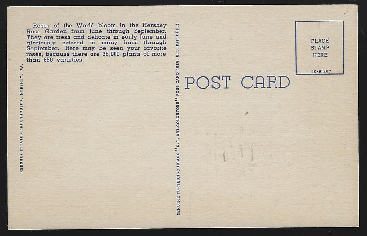 Vintage Unused Postcard Terraces of the Hershey Rose Garden Hershey Pennsylvania