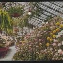 Interior Lincoln Park Conservatory, Chicago, Illinois 1911 Vintage Postcard