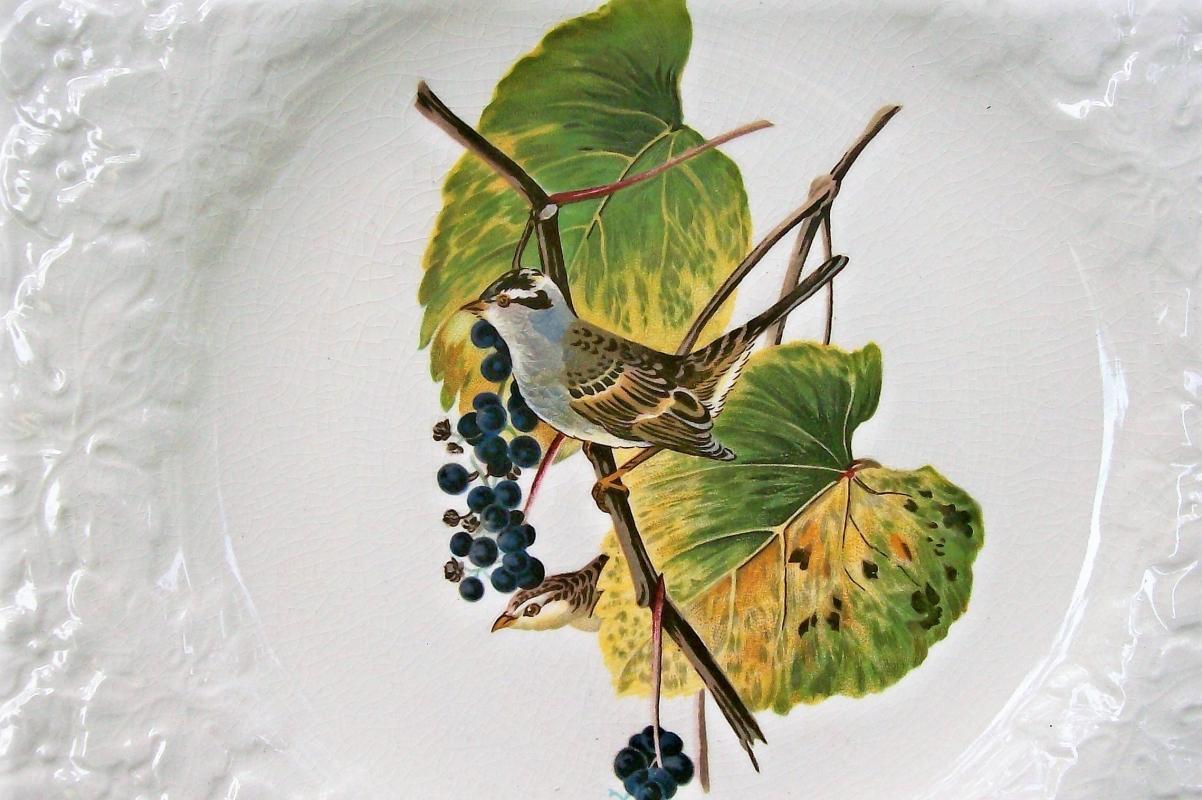 Vintage Meakin #114 Birds of America Plate 11