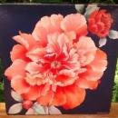 Vintage Springbok Jigsaw Puzzle #2117 Beauty in Blossom Peonies 500+ Pcs Complete w/Box