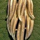 Vintage Coro Brooch/Pin Silvertone Leaf Bunch 1960s-70s