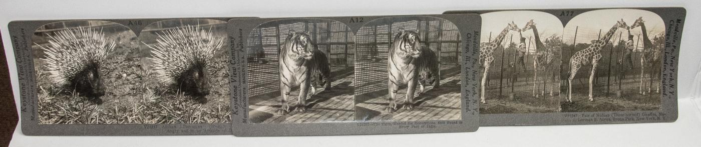 STEREOVIEWS - BOX SET OF 40 ANIMAL VIEWS