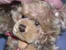 STEIFF ZOTTY MOHAIR 10 TEDDY BEAR W/ EAR BUTTON