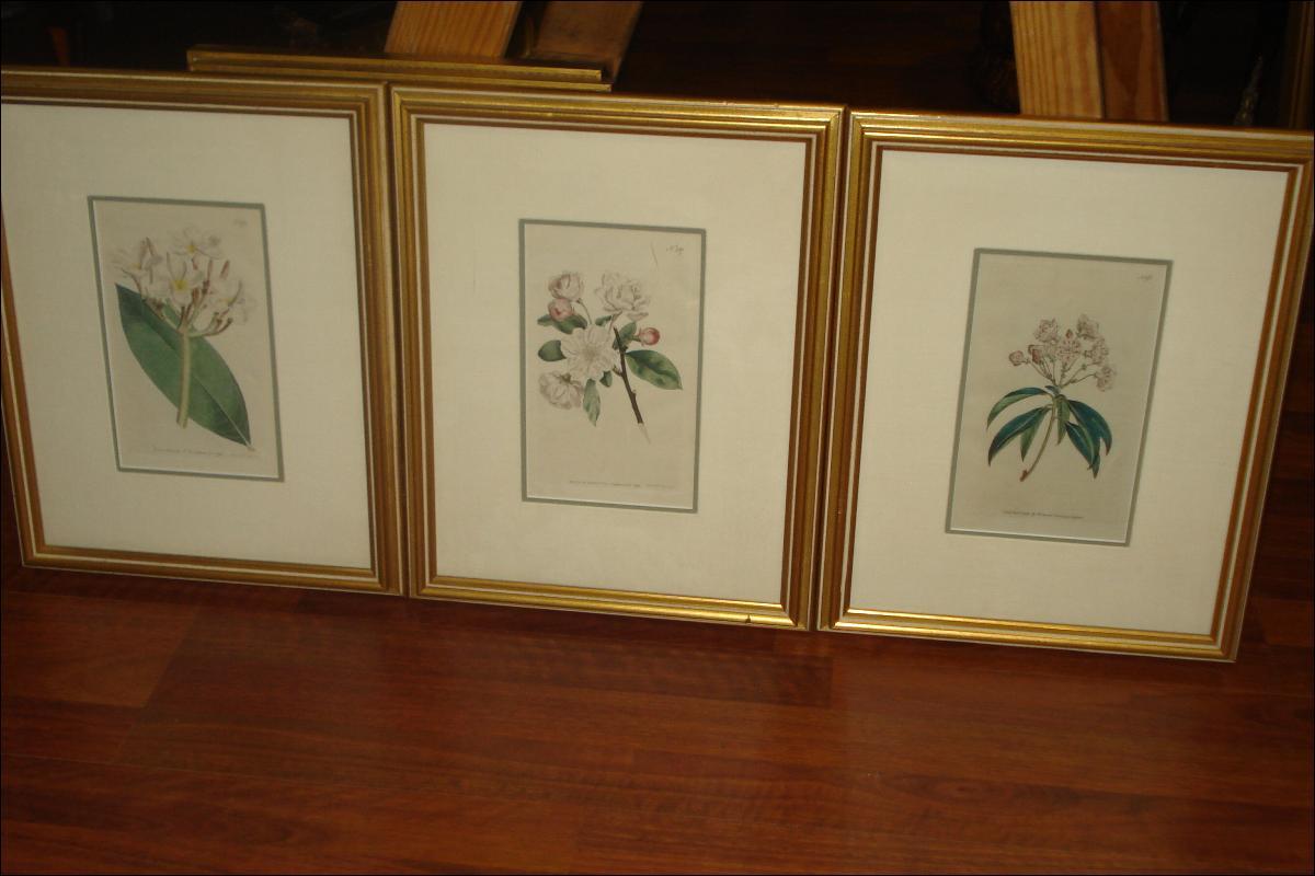Three Original Eighteenth Century Copperplate Engravings By William Curtis,