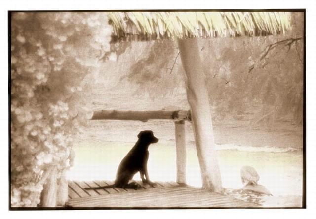 Rebecca Martinez: Beach Dog