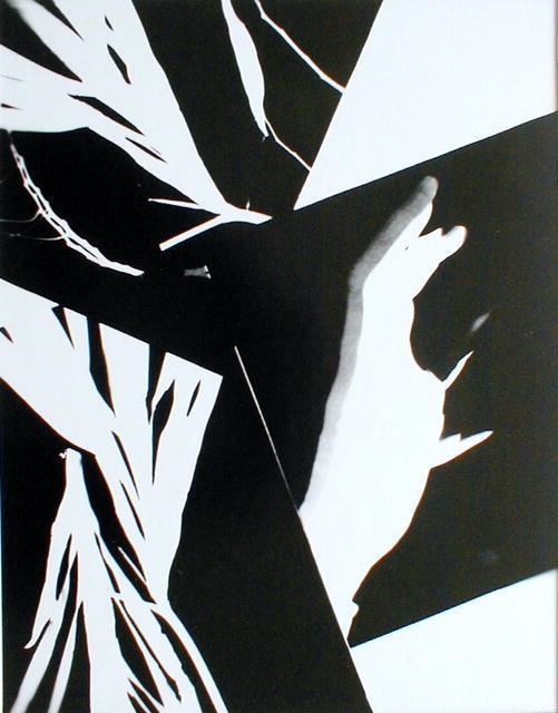 Marcia Schor: photogram: Expression