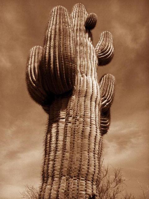 Rebecca Martinez: Succulent