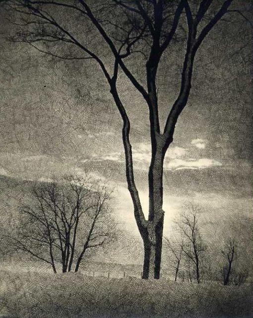 Mitchel Obremski: Tree (with printing scrim)