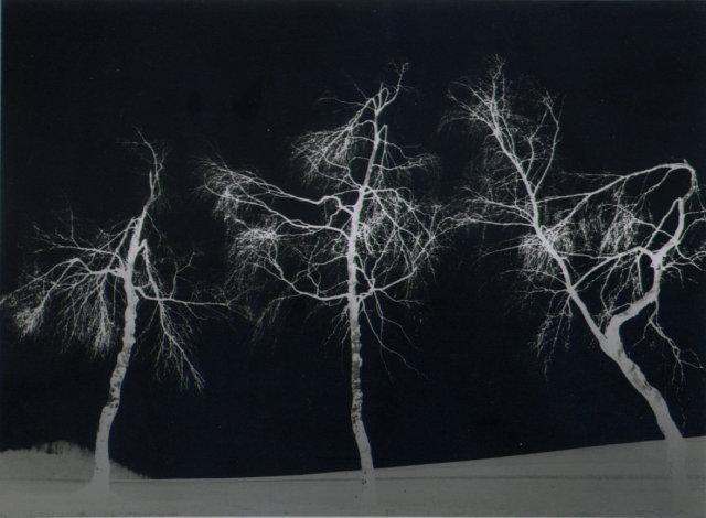 Erich Angenendt: Tanz der Birchen (Dance of the Birches)