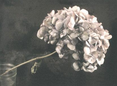 Catharina Marlowe: Hydrangea in Jar