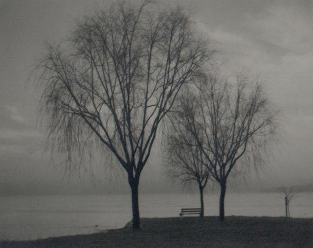 Edwin Avery Field: untitled (trees by the shore)