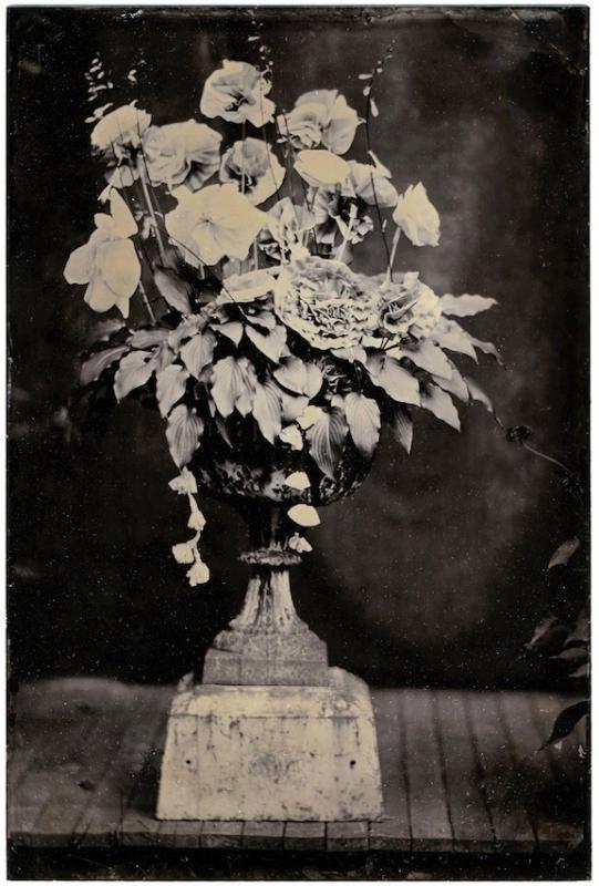 David Sokosh: Opera Flowers, Provincetown - tintype