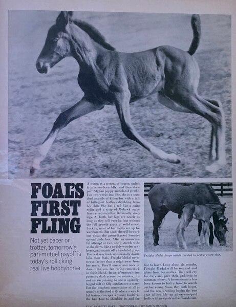 Foals first fling Sept 17