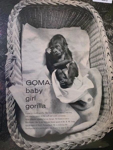 Magazine picture of Goma