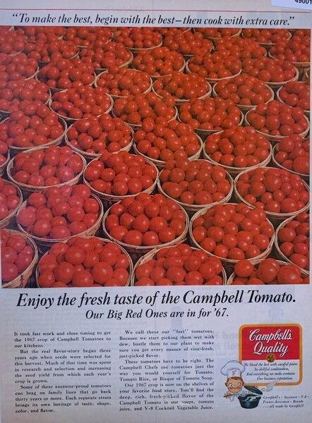 Campbells quality tomatoe