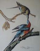 Passenger Pigeon Audubon print for Ethan Allen