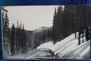 Trail Ridge Road Rocky Mt. Natl Park Postcard