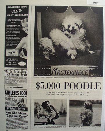 Champion Pulaskis Masterpiece Poodle 1949 Article