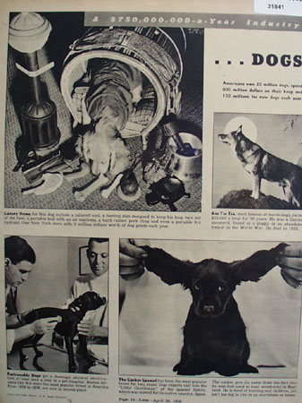 Dogs 750 Thousand Dollar A Year Industry 1938 Article