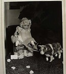 Pictures Doll Show June 1941