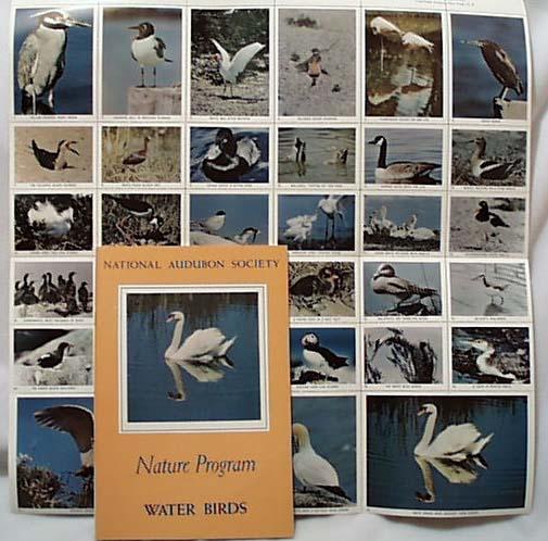 National Audubon 1956 Book Water Birds