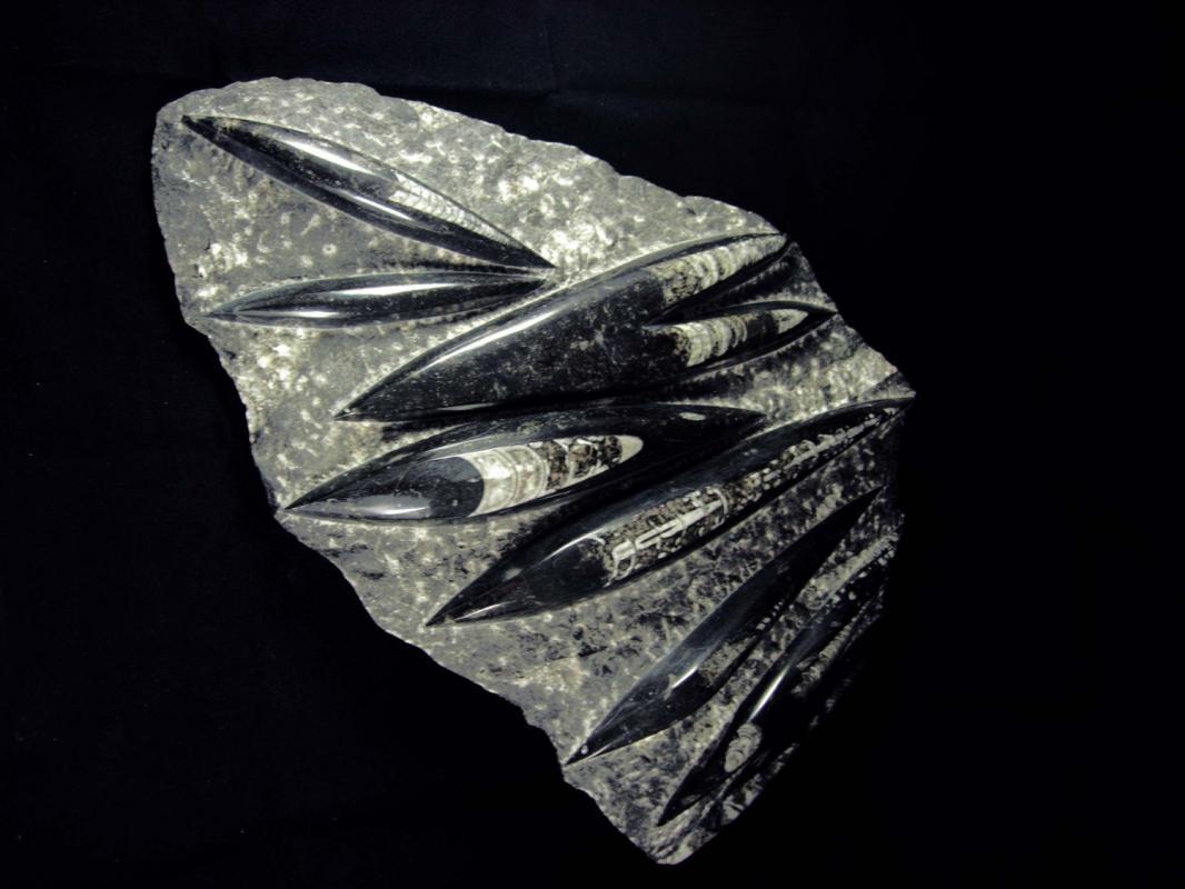 BIZARRE centerpiece sculpture huge Orthoceras fossil plate Gothic black white claw Raven Exquisite Large Detail Sculpture