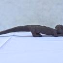 ANIMAL GUARDIAN STATUE Ritual Figure Animal Myth Pagan Object Sculpture Dayak
