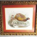 Hand Colored 19th Century Lithograph Phasianus Colchicus Pheasant w/Baby Chicks