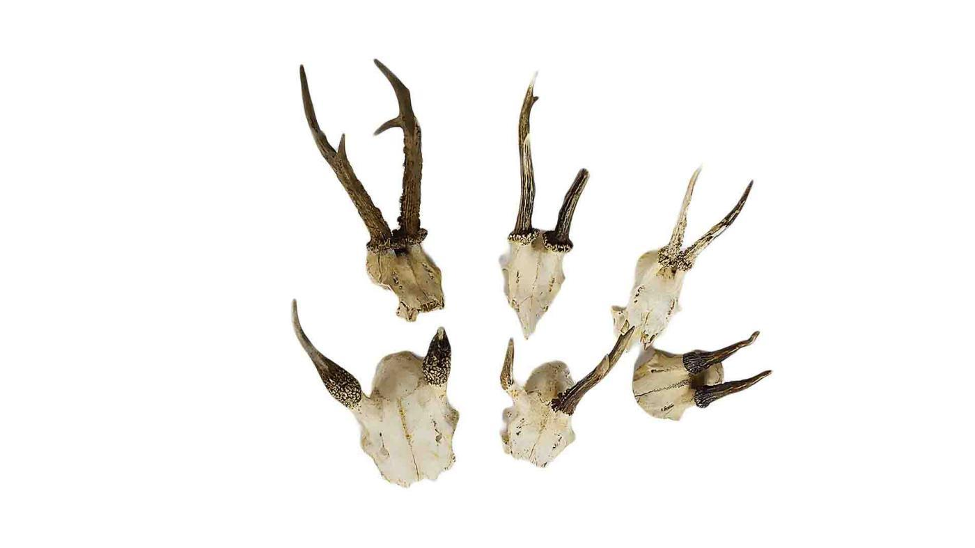 Small Animal Skull with Antlers