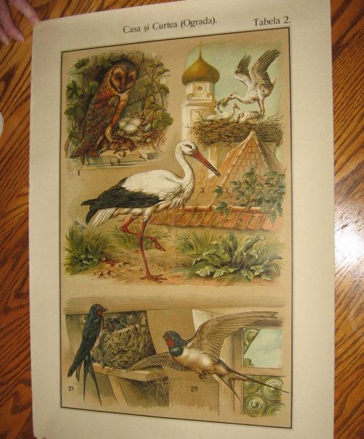 Antique Color Lithograph BIRD BIRDS  Collage  - FAL Art