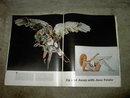 LIFE MAGAZINE JANE FONDA BARBARELLA COVER 1968 MARCH 29