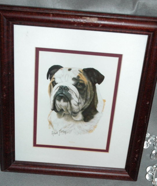 Bull Dog Print, Robert J. May, Matted & Framed   * PRICE REDUCED !**