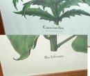 2 Clayton Hays Design Prints  Botanical Garden  Prints Sunflower &Thistle
