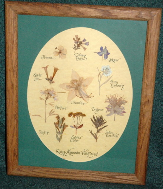 Rocky Mountain Wildflowers Botanical  Display