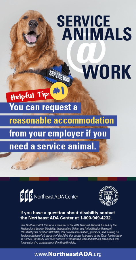 Infographic titled 'Service Animals at Work: Helpful Tip #1' featuring a sitting service dog in a vest.  Service Animals at Work - Helpful Tip #1: You can request a reasonable accommodation from your employer if you need a service animal.  If you have any questions about the Americans with Disabilities Act, contact us at 1-800-949-4232