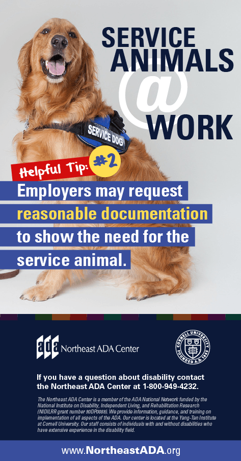Infographic titled 'Service Animals at Work: Helpful Tip #2' featuring a sitting service dog in a vest.  Service Animals at Work - Helpful Tip #2: Employers may request reasonable documentation to show the need for the service animal.  If you have any questions about the Americans with Disabilities Act, contact us at 1-800-949-4232